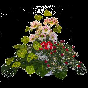 Composizione funebre Anthurium amarilli roselline rosse