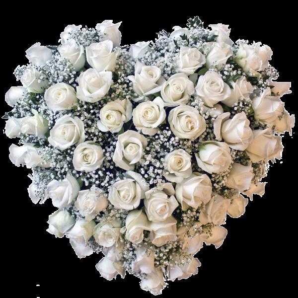 Cuore di rose bianche