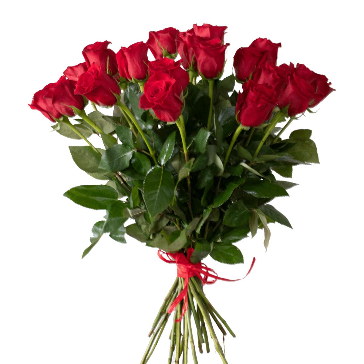 Cinquanta Rose Rosse | Casa delle Piante | La pianta