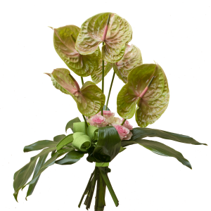Mazzo lineare con Anthurium Pistache , rose rosa, foglia di monstera
