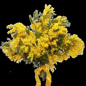 Mazzo di mimosa