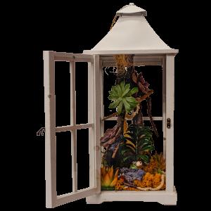Composizione di piante di echeveria in lanterna di latta